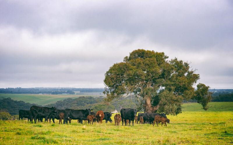 PopUp profile – Moorabool River Beef