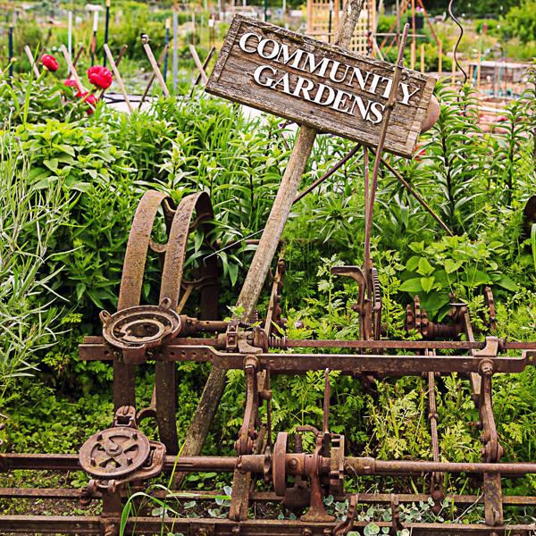 community garden meredith